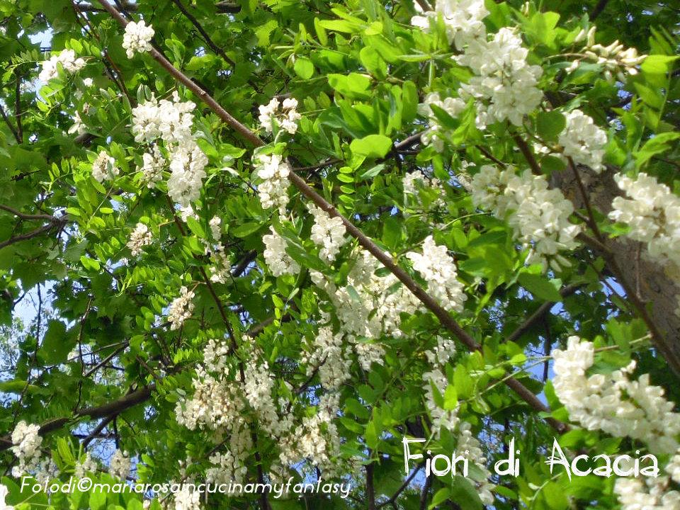 Decorazione Zucchero Semolato Bianco Q.b. Fiori Di Acacia
