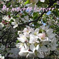 Menu di Primavera