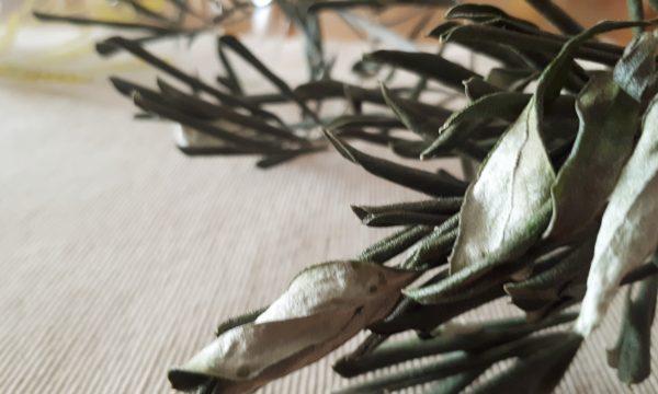 Estratto di foglie di ulivo – Mille benefici in un cucchiaino!