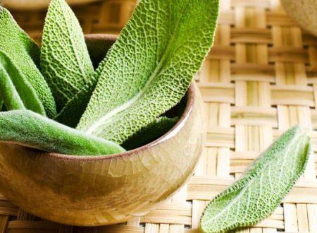 Infuso di Salvia – Scopri tutti i benefici di questa pianta