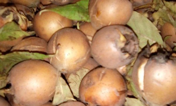 Marmellata di nespole invernali – 1 Frutto 1000 Benefici