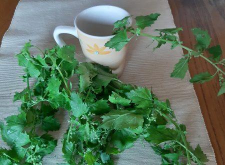 Tisana all'ortica – Depurarsi naturalmente