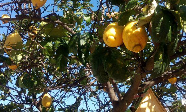 Come conservare il limone più a lungo