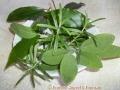 Alchimia in cucina con le erbe aromatiche