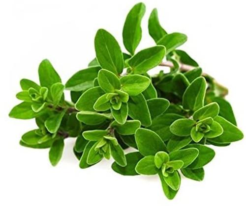 come utilizzare le erbe aromatiche