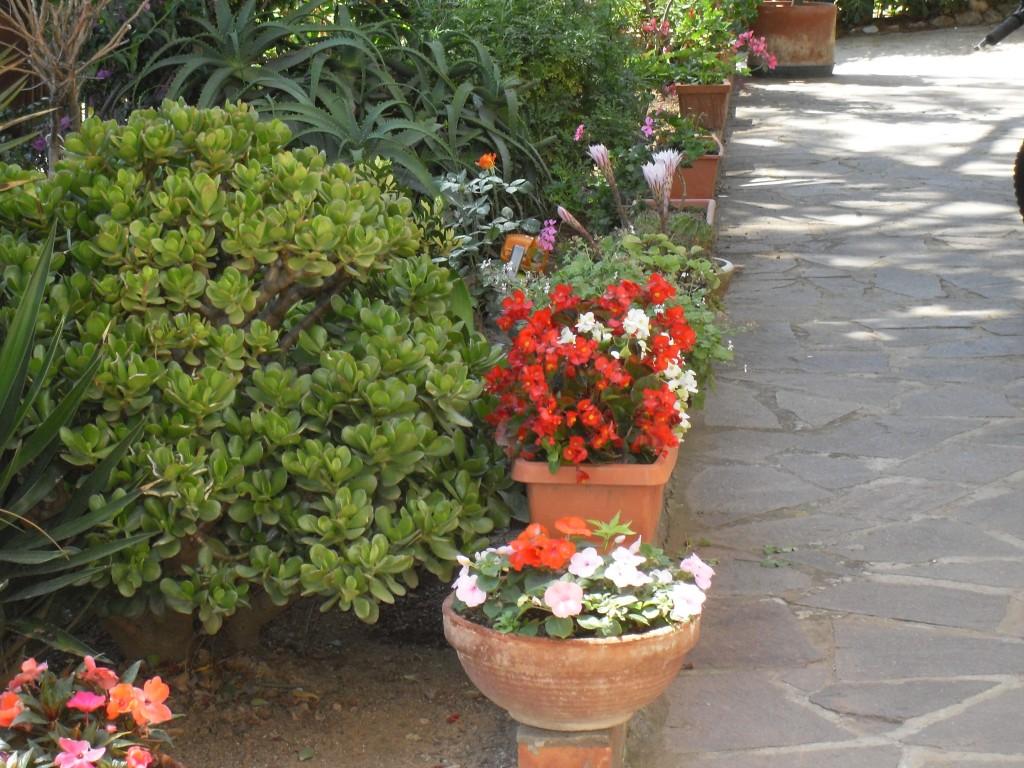 Urban gardening la città il mio giardino allinfo