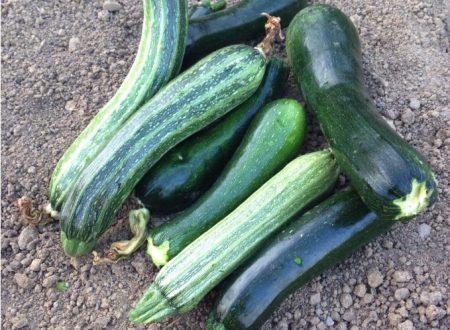 Dal mio orto: Zucchine