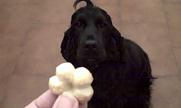 Biscotti al burro per Daisy