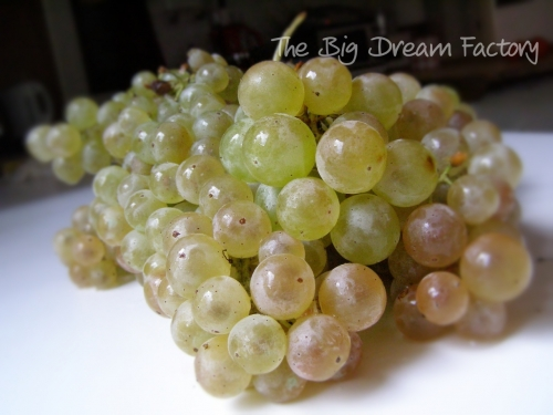 Grapes contain resveratrol for your brain