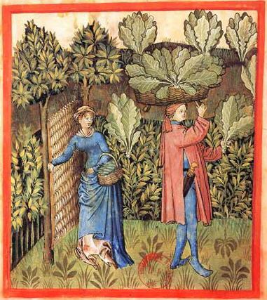 Tacuinum_Sanitatis-cabbage_harvest