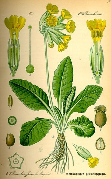 Tortini quinoa di primavera con primule e spinaci 4