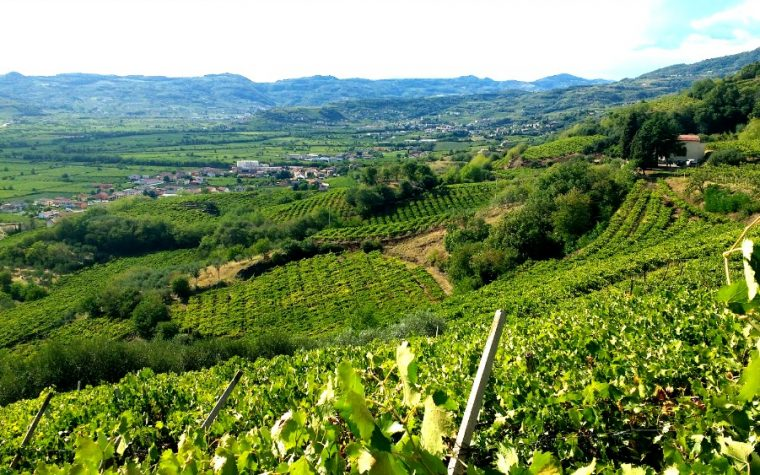 Soave tra vigne e borgo scaligero il mio racconto