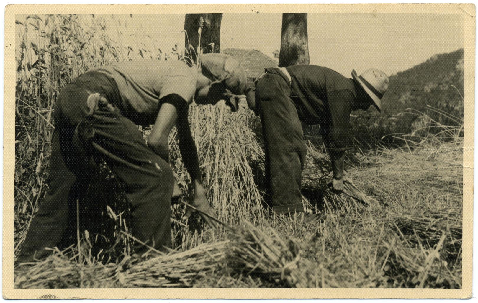 Grani antichi tuteliamo la biodiversità agro alimentare 4