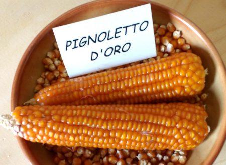 Alla scoperta del pignoletto d'oro di Rettorgole De.Co.