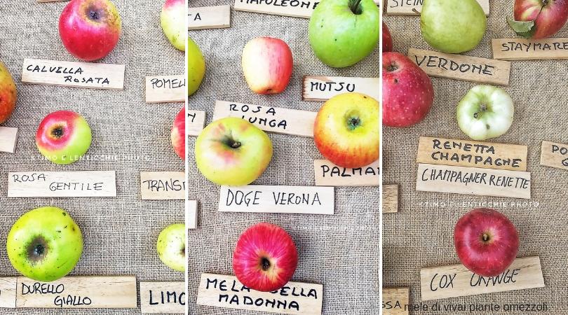 Torte di mele 10 ricette perfette