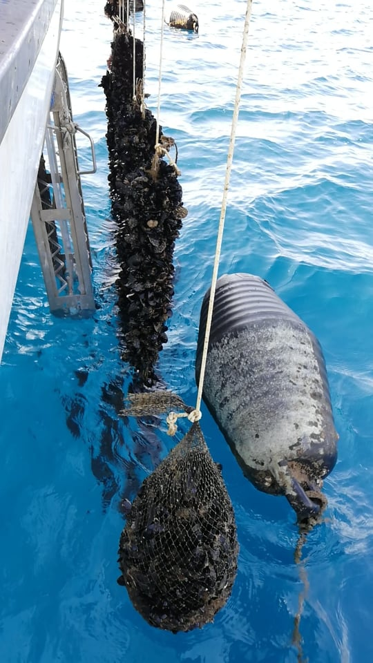 ur del Salento Mare vivo castro marina