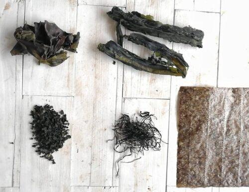 Come usare le alghe in cucina – proprietà