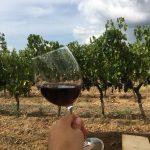 Piacenza ed i vini del Podere Casale