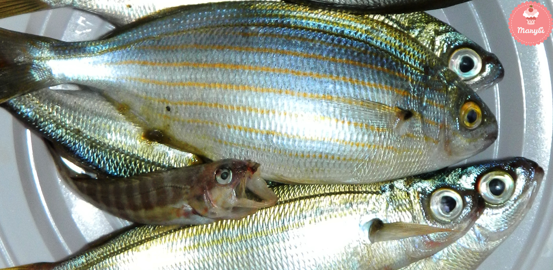 Pesce Descrizione Come Cucinarlo E Come Conservarlo Marybì