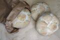 Rosette rustiche con farina Ori di Sicilia