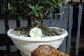 Plumcake con farina di riso venere e salumi