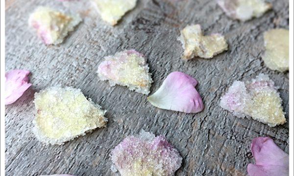 Petali di Rosa canina cristallizzati