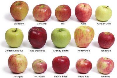Curiosità: le mele