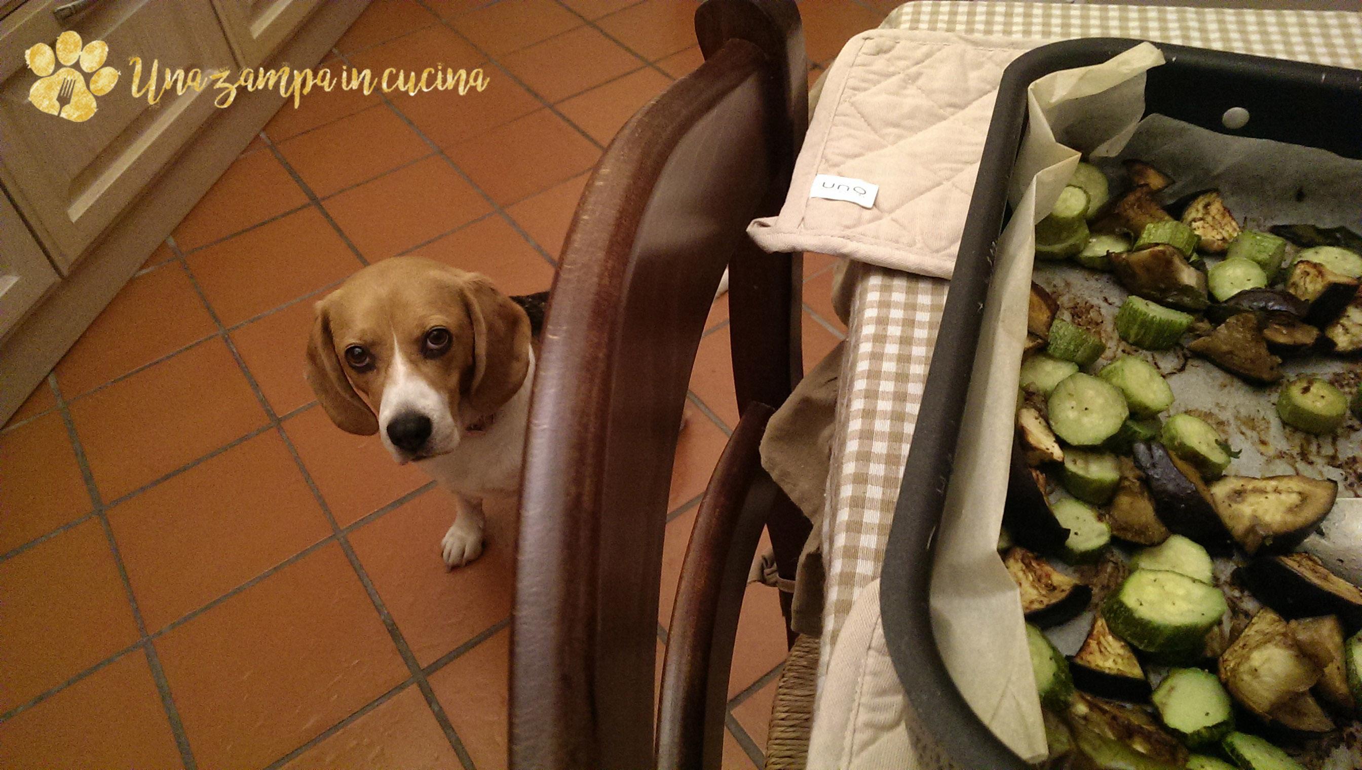 Tacchino con zucchine e melanzane per cani e umani