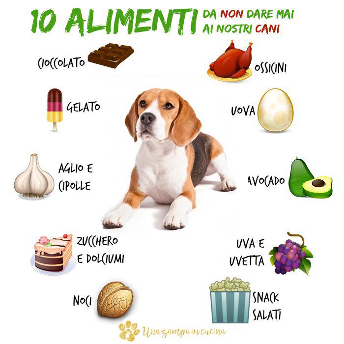 10 Alimenti da non dare ai cani: ecco gli alimenti da non dare ai nostri cani. Dal cioccolato e il gelato, all'avocado e l'aglio. Scoprili tutti ;-)