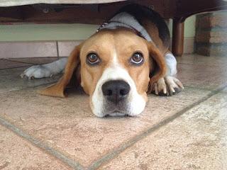 Biscotti per cani fatti in casa: biscotti per cani fai da te