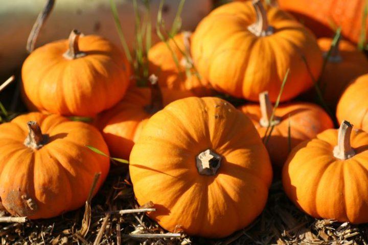 Non Festeggio Halloween.Le Mie Ricette Per Festeggiare Halloween