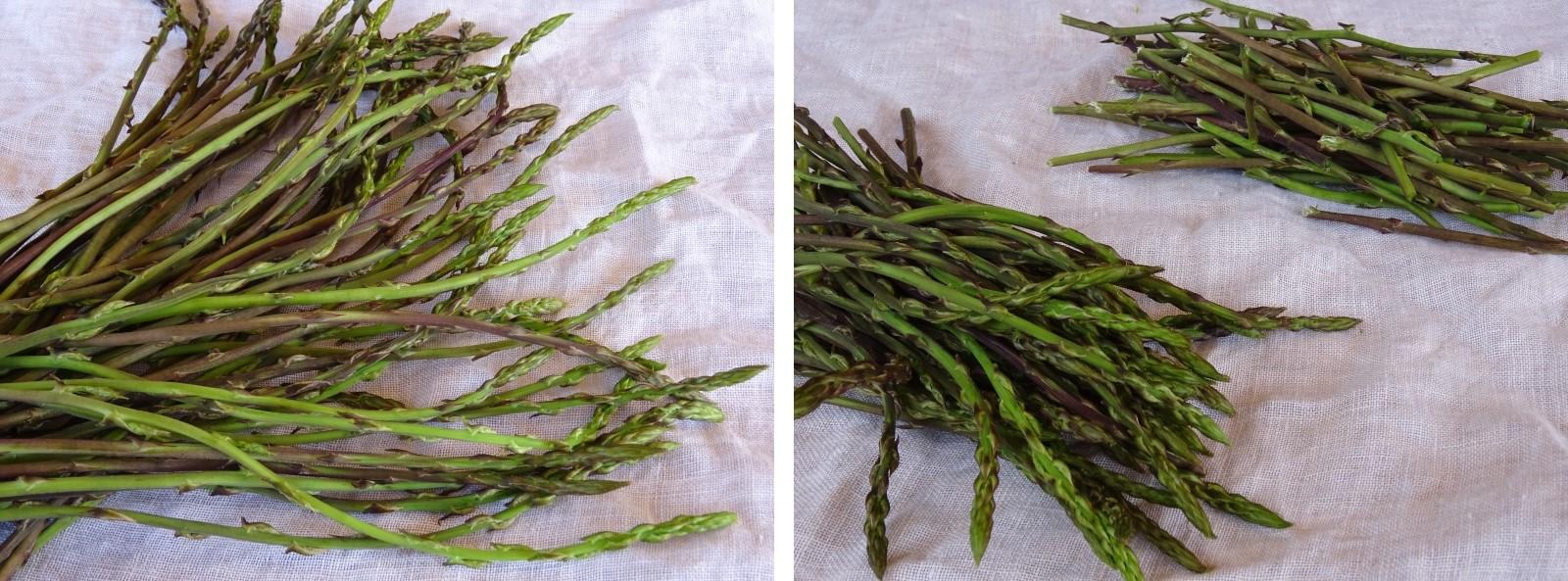 preparazione degli asparagi per i cannelloni ricotta e asparagi